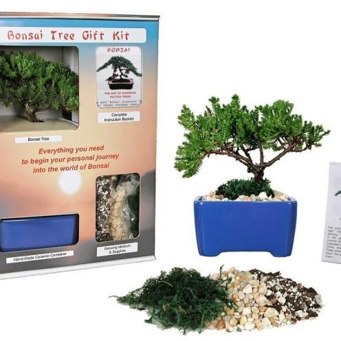 Bonsai Tree Kit,www.AfterOrangeCounty.com