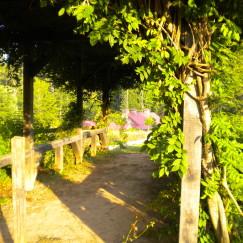 Serenbe, Georgia | www.AfterOrangeCounty.com