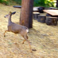 Deer, www.AfterOrangeCounty.com