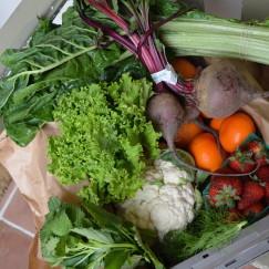 Abundant Harvest Organic Produce | www.AfterOrangeCounty.com