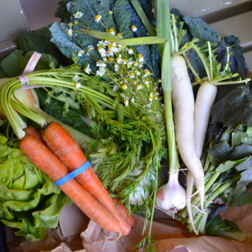 CSA Veggies from Abundant Harvest | www.AfterOrangeCounty.com