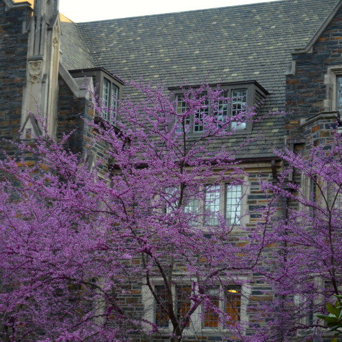 Duke University | www.AfterOrangeCounty.com