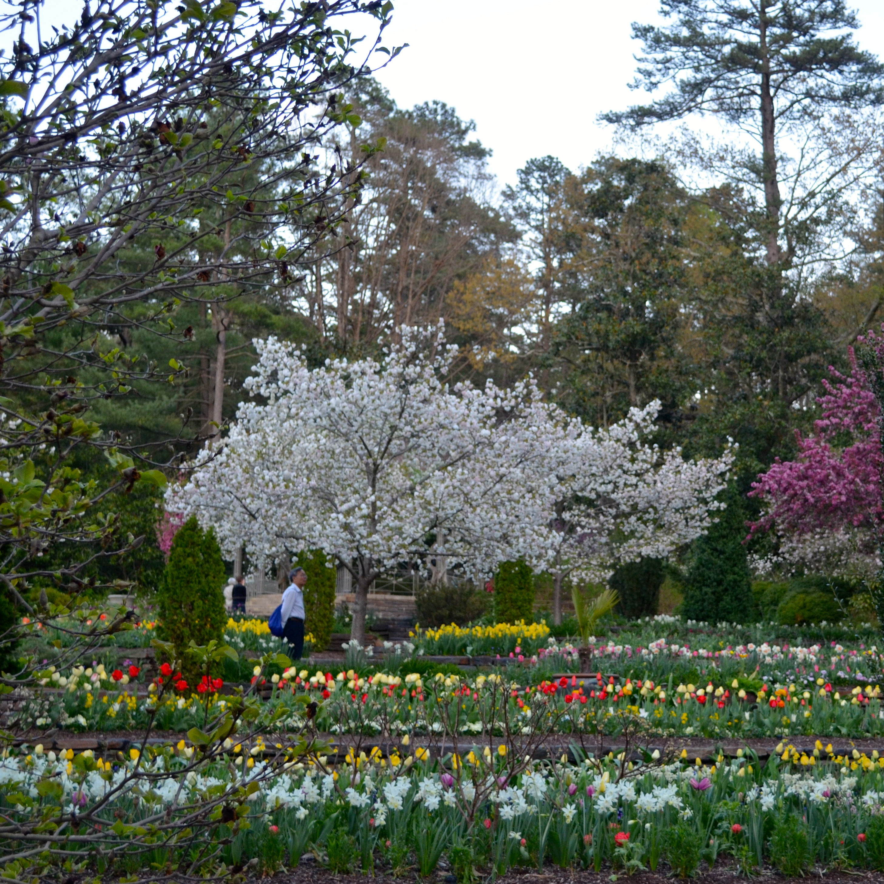 Beautiful home gardens - Duke University Campus Tour Viewing Gallery
