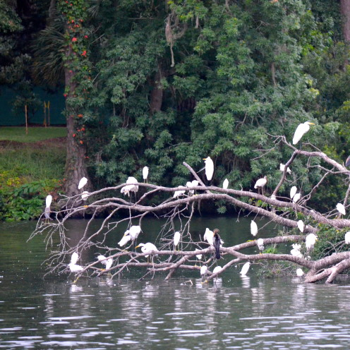 Egrets in Palmetto Bluff, South Carolina | www.AfterOrangeCounty.com