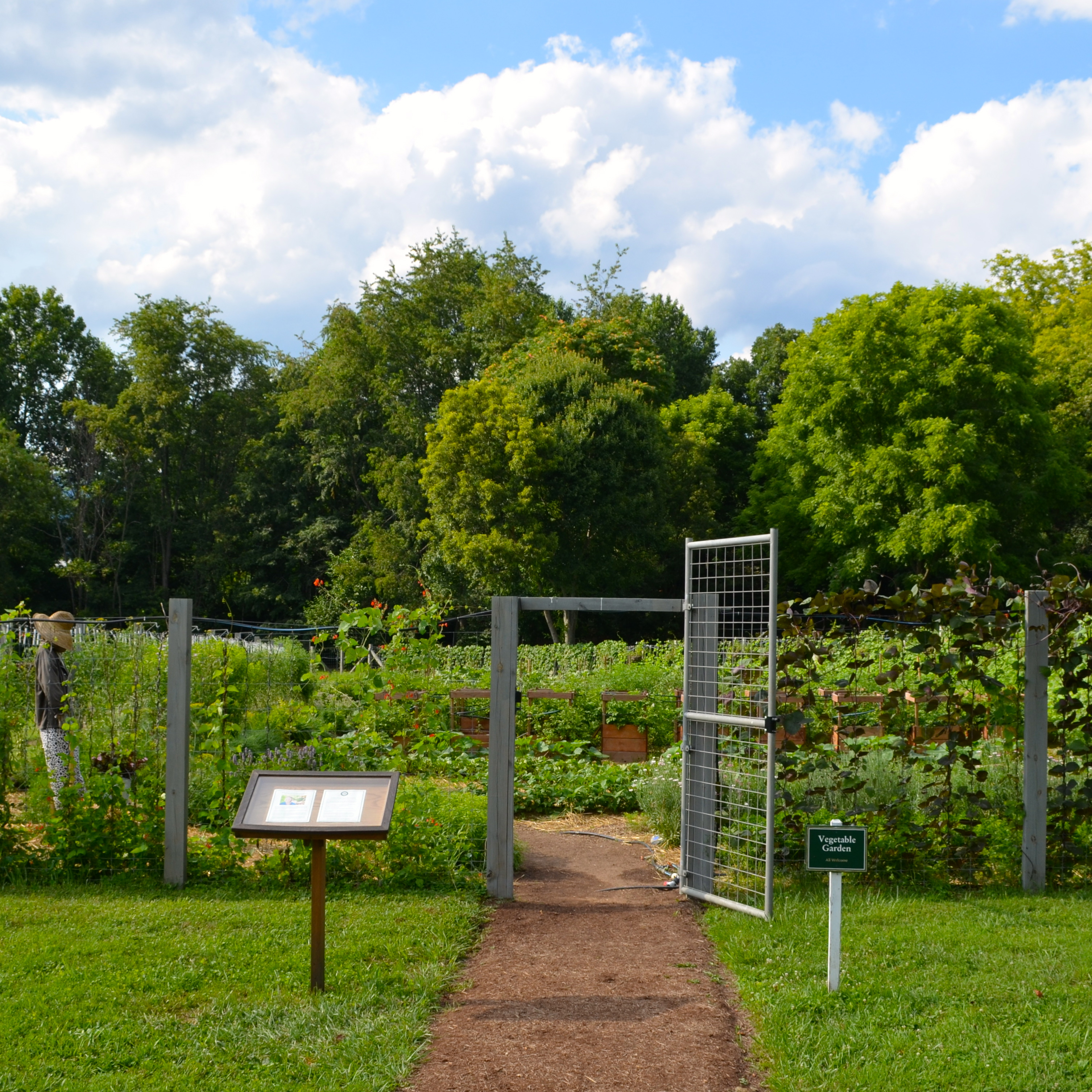 A BEAUTIFUL VEGETABLE GARDEN After Orange County