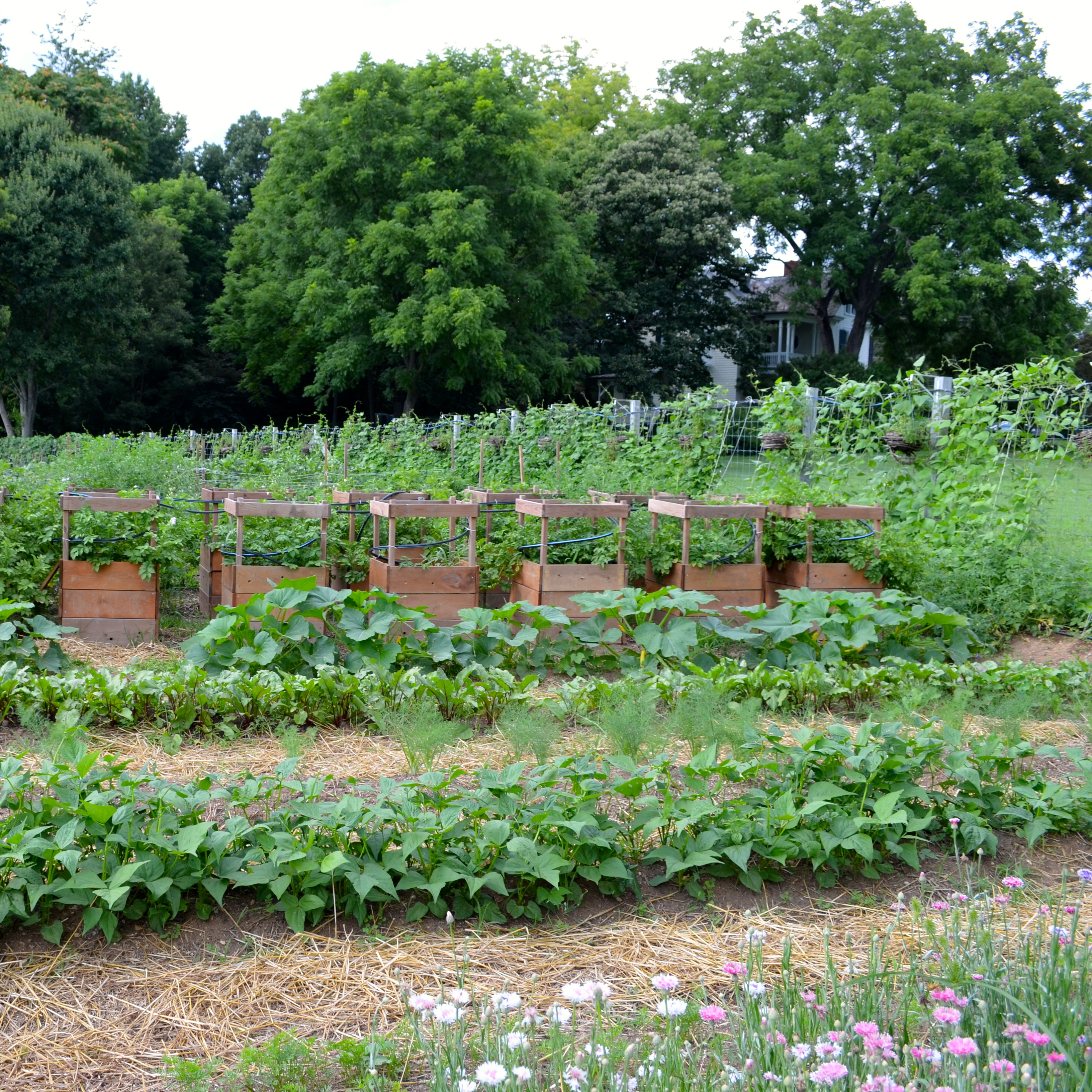 28 beautiful vegetable garden pictures french