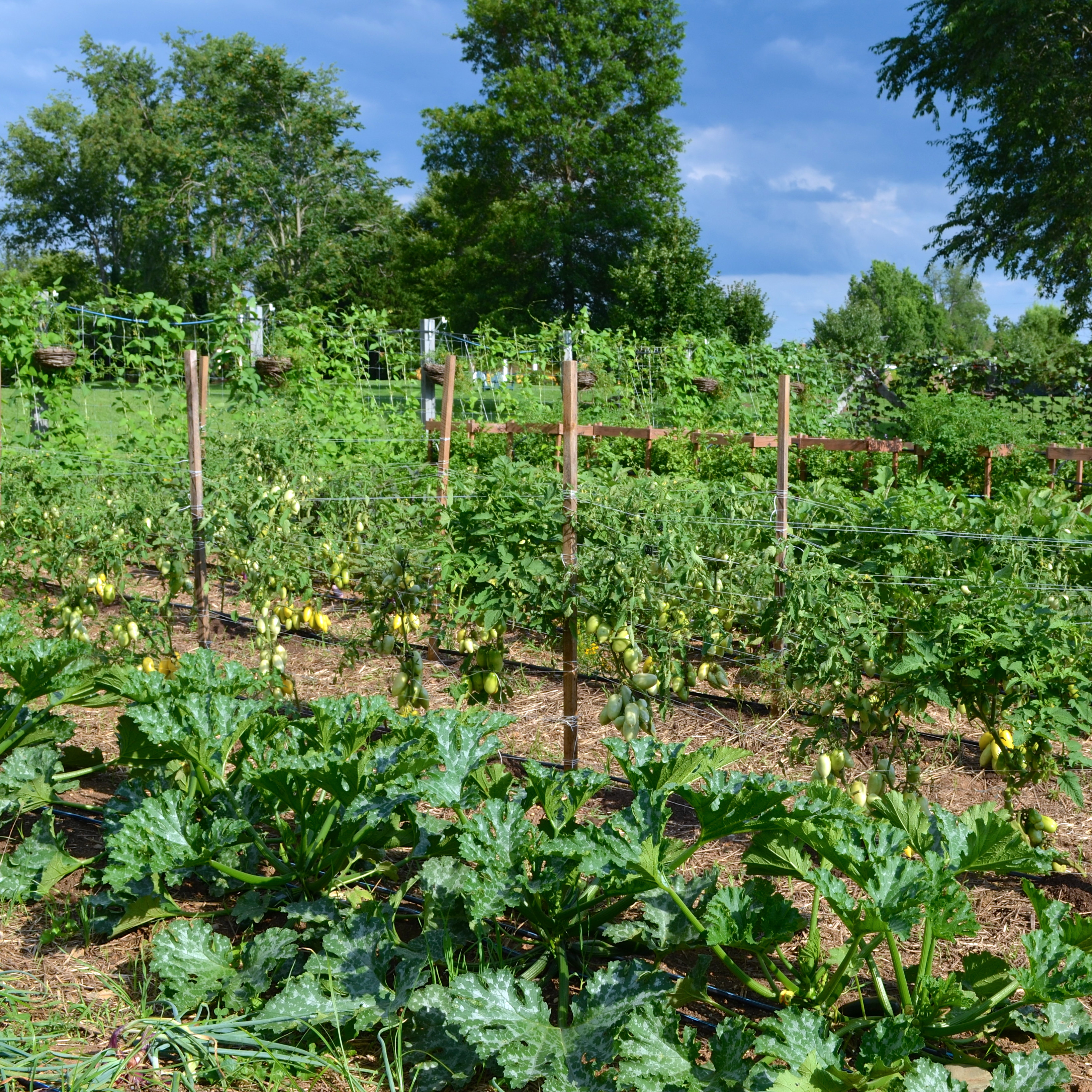 beautiful vegetable garden the inn at little washington www