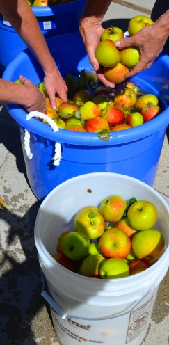 THE MAKING OF HARD APPLE CIDER | www.AfterOrangeCounty.com