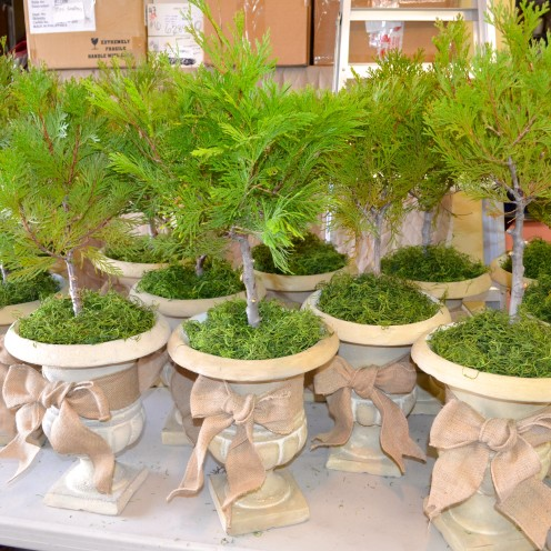 Live Tree Centeroieces in Urns | www.AfterOrangeCounty.com