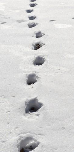 Forest Footprints | www.AfterOrangeCounty.com