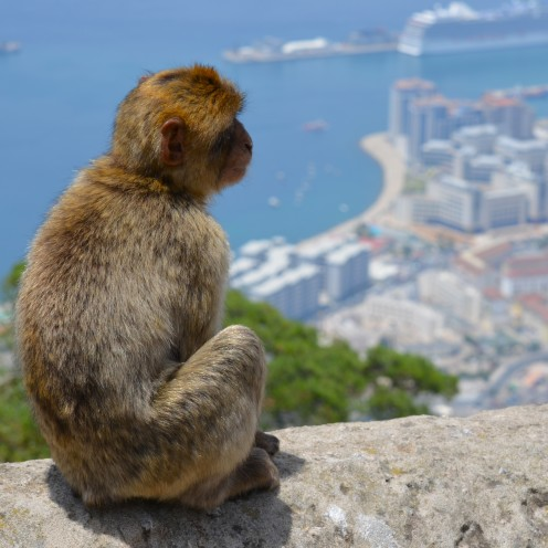 The Barbary Apes of Gibraltar | www.AfterOrangeCounty.com