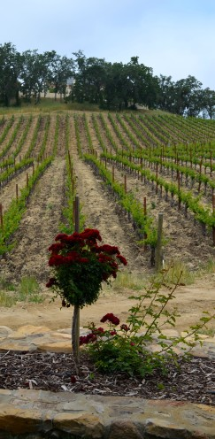 A VISIT TO MY FAVORITE WINERY | #Justin Vineyard & #Winery | www.AfterOrangeCounty.com