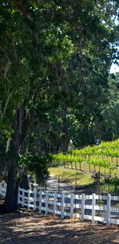 A VISIT TO MY FAVORITE WINERY | #Justin #Vineyard & #Winery | www.AfterOrangeCounty.com