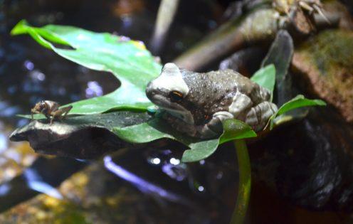 SUNDAYS WITH CELIA VOL 24 | National Zoo in DC | www.AfterOrangeCounty.com