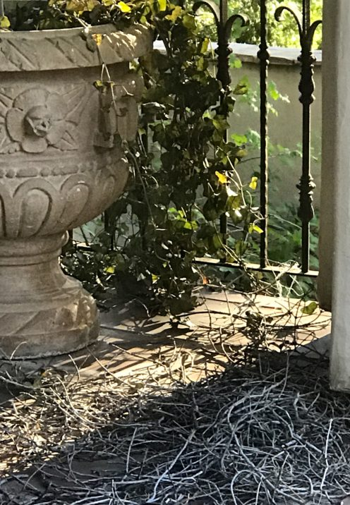 SUNDAYS WITH CELIA VOL 36 | Nest Building | www.AfterOrangeCounty.com