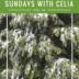 SUNDAYS WITH CELIA VOL 56 | www.AfterOrangeCounty.com
