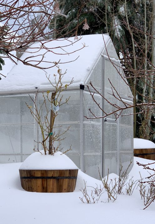 WHAT WINTER AT MY HOUSE LOOKS LIKE   www.AfterOrangeCounty.com