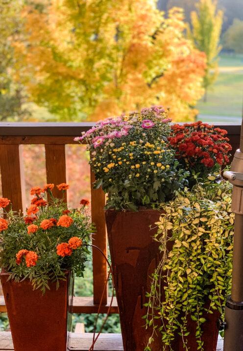 SUNDAYS WITH CELIA VOL 95 | Fall in Lake Arrowhead | www.AfterOrangeCounty.com