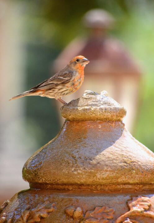 SUNDAYS WITH CELIA VOL 101 | www.AfterOrangeCounty.com | #Fountain #BirdWatching