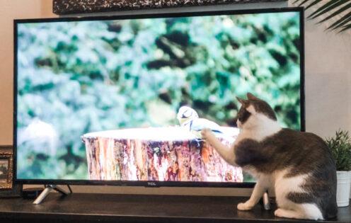 SUNDAYS WITH CELIA VOL 103 | Feline Fun | www.AfterOrangeCounty.com